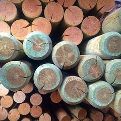 Pali tondi in pino trattato